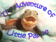 An Introduction to The Adventure of Little Papoe (Serial)