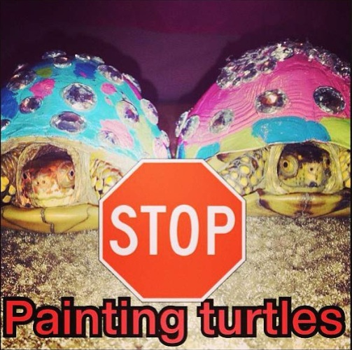No Paint Turtle